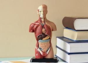 Métodos para avaliação da composição corporal
